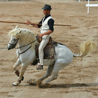 Spectacle Camarguais