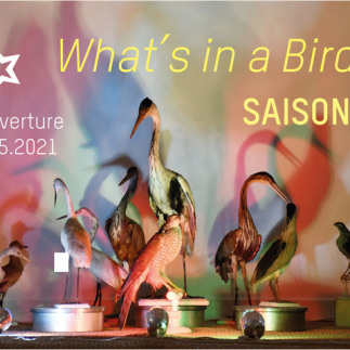 Exposition What's in a Bird ?